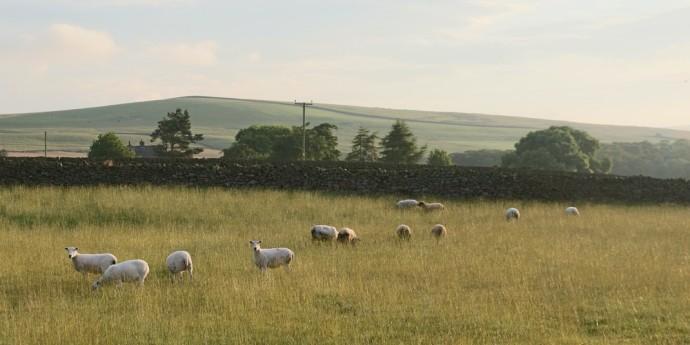 Great walks near Cringles House, near the Yorkshire Dales